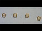 Thalassiosira anguste-lineata